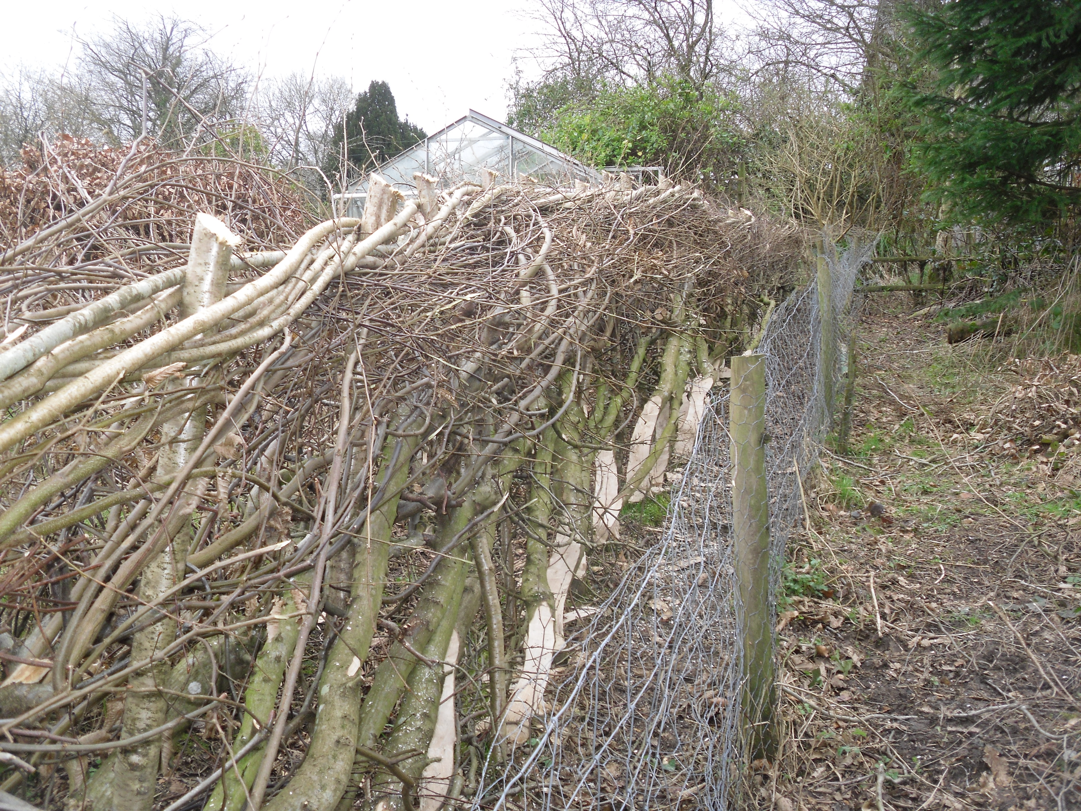 Hedgelaying Weekend Part 2