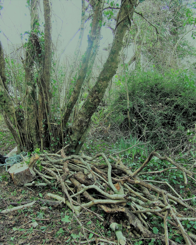 Woodland Proposal in Bishopston: Ysgol Amgylchedd