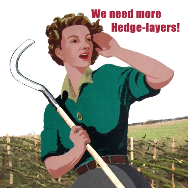 Hedgelaying 4 Day Course